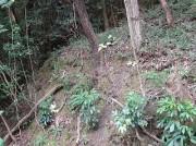 kouyouhajimaru